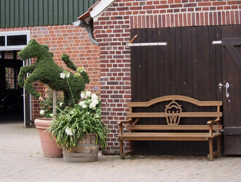 Sport Warmbloods For Sale - Horse Shopping Trips